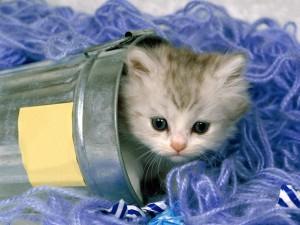 Postal: Gatito dentro de un cubo
