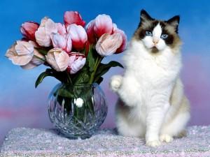 Gato junto a un jarrón con flores