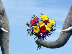 Postal: Elefantes enamorados