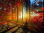 Rayos del sol pasando a través de los árboles