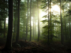 La espesura del bosque filtrando la luz del sol