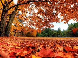 Postal: Un manto de hojas secas