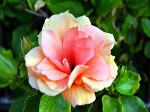La delicadeza de una flor