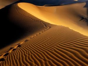 Huellas en la arena del desierto