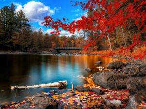 Postal: Arce de hojas rojas a orillas del lago Oxtongue (Ontario, Canadá)