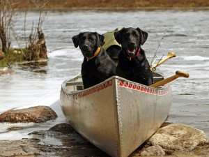 Dos perros en un kayak