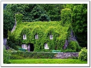 Postal: Casa cubierta de hiedra