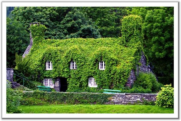 Casa cubierta de hiedra