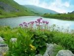 Lago y flores silvestres en los montes Cárpatos