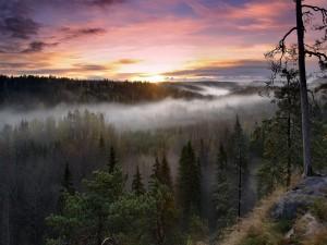 Postal: Parque nacional de Nuuksio, Finlandia