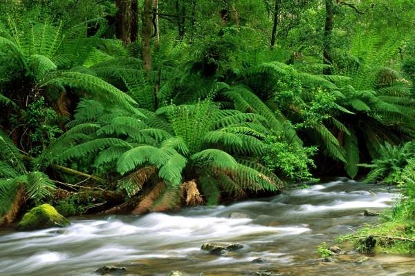Abundante vegetación verde a la orilla de un río