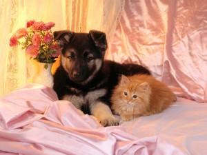 Postal: Perro y gato muy amigos
