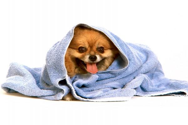 Perrito envuelto en una toalla