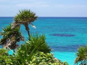 Palmeras frente al mar azul