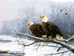 Pareja de águilas cerca de un río nevado