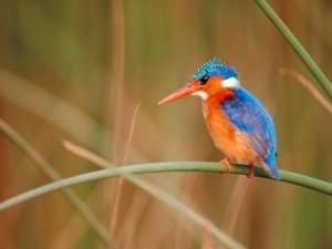 Postal: Pájaro colorido de pico largo