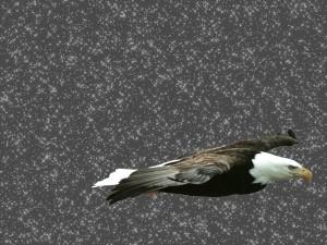 Postal: Águila con estrellas de fondo