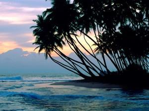 Postal: Palmeras en una playa de Colombo, Sri Lanka