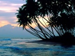 Palmeras en una playa de Colombo, Sri Lanka