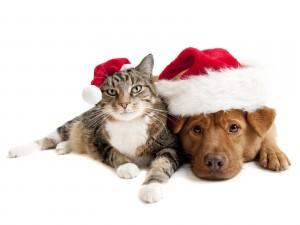 Gato y perro celebrando la Navidad juntos