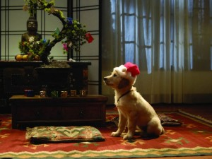 Postal: Perro esperando a Papá Noel