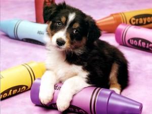 Cachorro jugando con unos lápices de colores