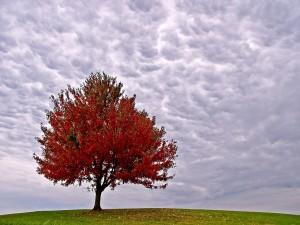 Árbol de hojas rojas en otoño