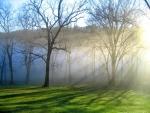 Niebla cubriendo los árboles en invierno