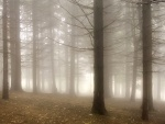 Niebla invernal