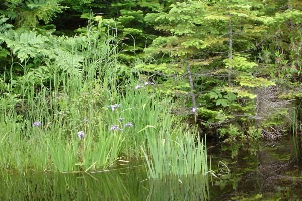 Vegetación de orilla