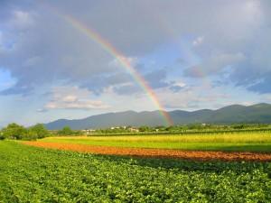 Postal: Doble arcoíris en el campo