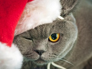 Gato vestido de Papá Noel y guiñando un ojo