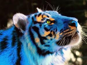 Destellos anaranjados en la cabeza de un tigre