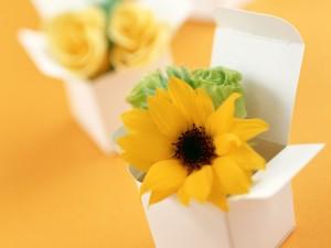 Postal: Cajas con flores amarillas para regalo