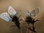 Hermosas mariposas