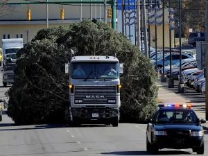 Transportando un gran árbol por la carretera