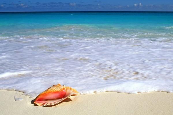 Caracola en la arena blanca de la playa