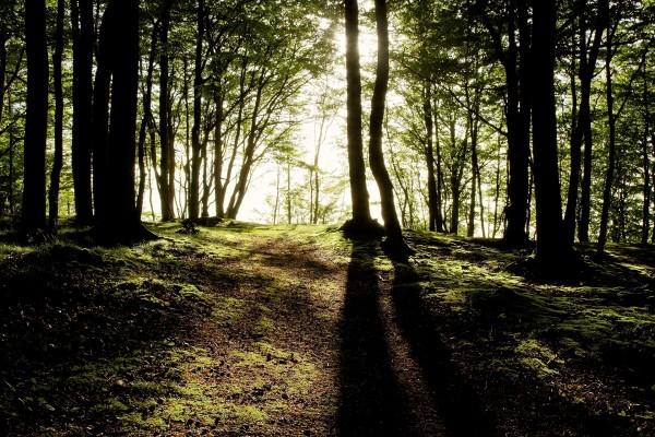 Bosque de suelo musgoso