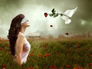Postal: Paloma trayendo una rosa a una mujer
