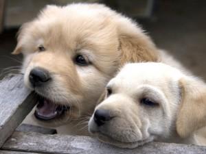 Dos lindos cachorros
