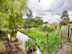 Vacas pastando junto a un arroyo