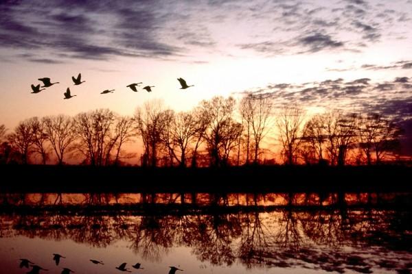 Volando en grupo al amanecer