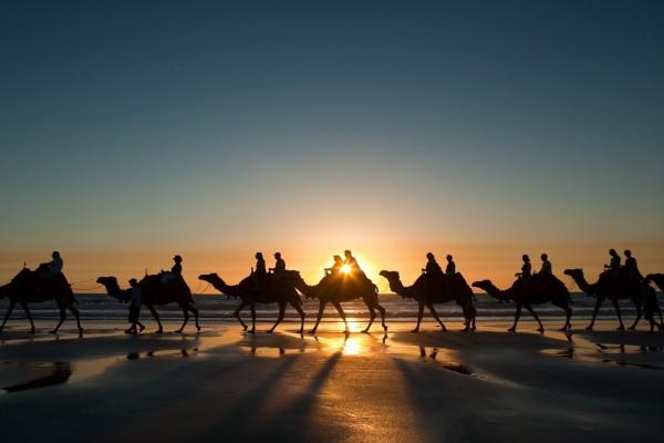 Caravana de camellos por la playa al amanecer
