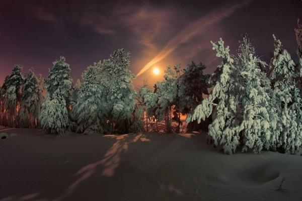 Pinos nevados en un día oscuro