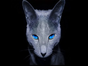 Gato negro de ojos azules