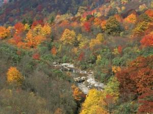 Parque nacional de las Grandes Montañas Humeantes (Estados Unidos)