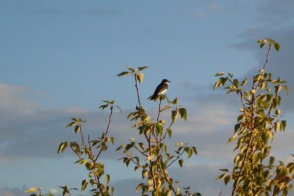 Pájaro en la rama de un árbol
