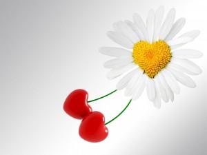 Una margarita con forma de corazón y dos cerezas