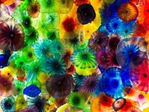 Muchas ventosas de colores