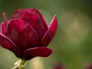 Postal: Magnolia